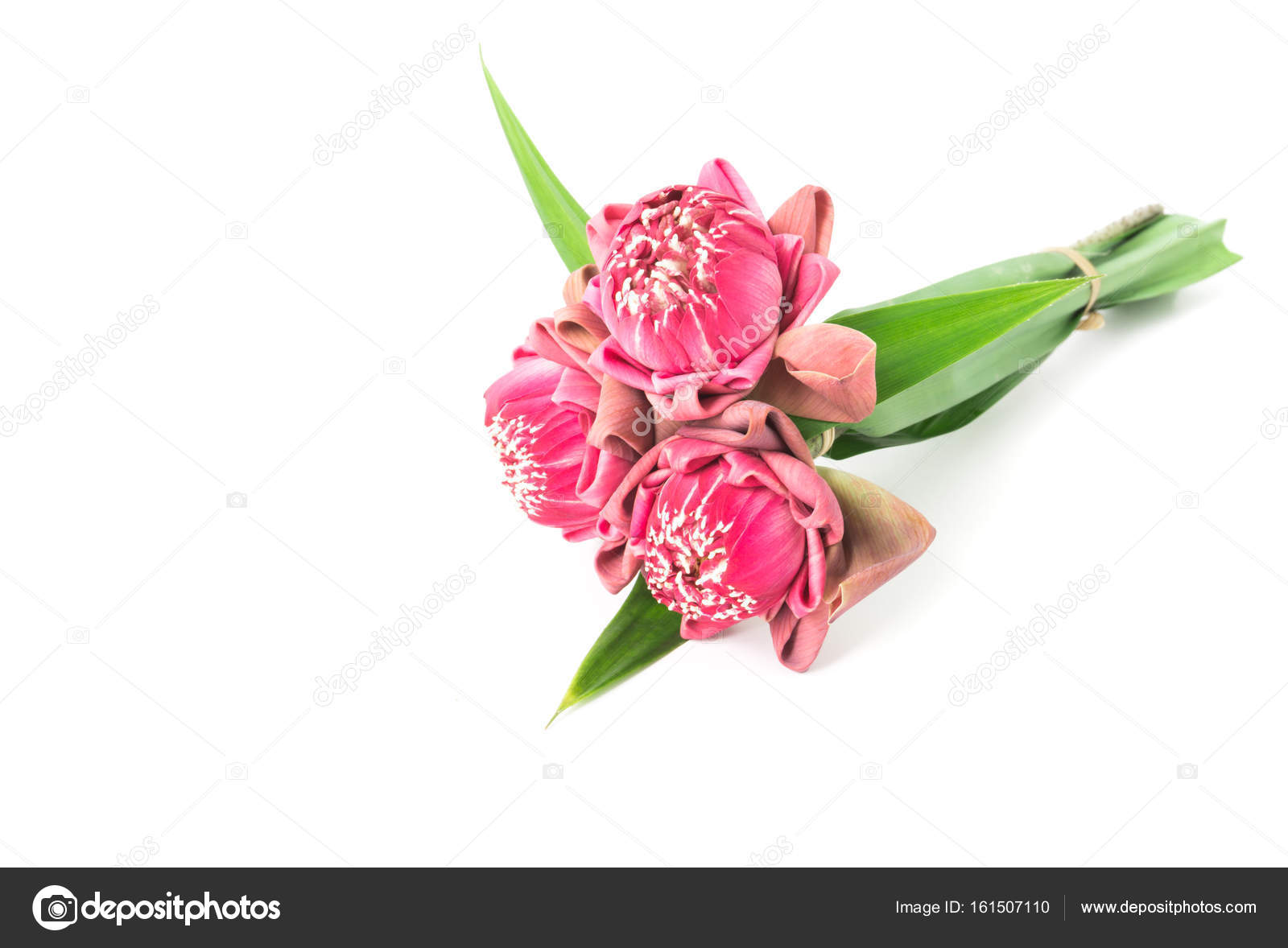 Buddhist pink Lotus Flower offerings to gods– stock image