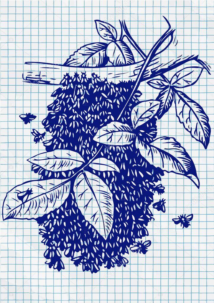 Bee Hive drawing