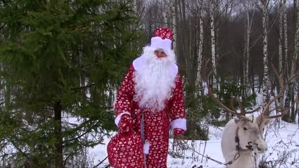 Santa Claus és a rénszarvas gratulál a karácsonyi zöld fenyő, téli erdő közelében