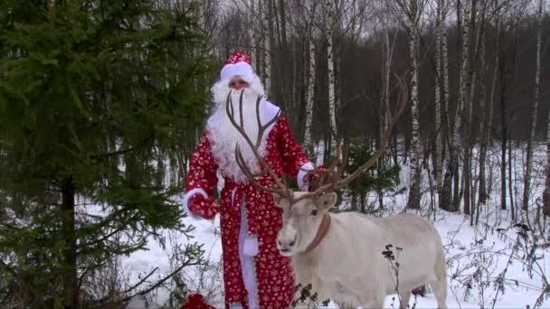 Rénszarvas, a Mikulás, a téli erdő közelében fenyő Gratula a gyerekek, hogy egy új évvel ezelőtt előest