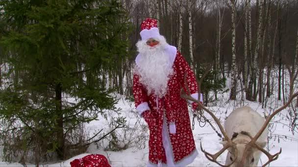 Santa Claus v červený kostým krmení sobů a mluví do kamery, sněhové koule létat v Jelení