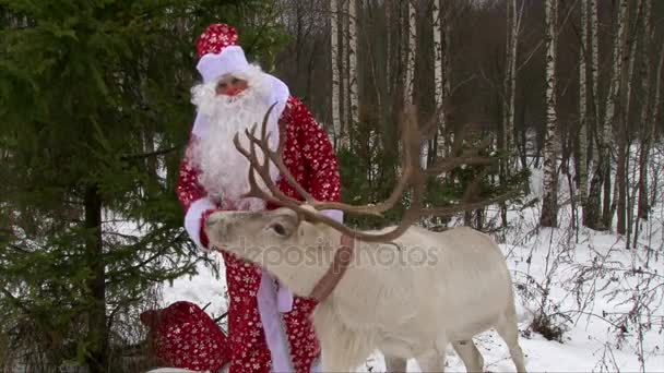 Rénszarvas, Santa Claus a téli erdő és a nagy Agancsok gratulálok gyerekek kamera