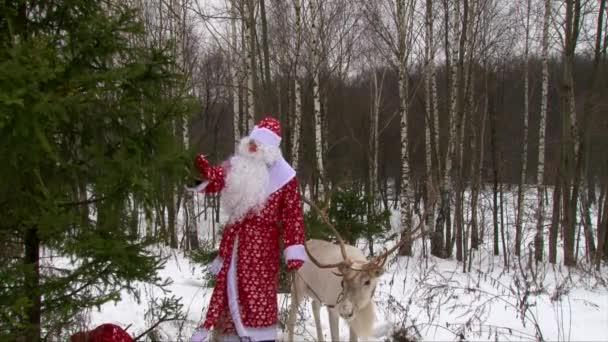 Santa Claus a sobů s velkými parohy v borového lesa