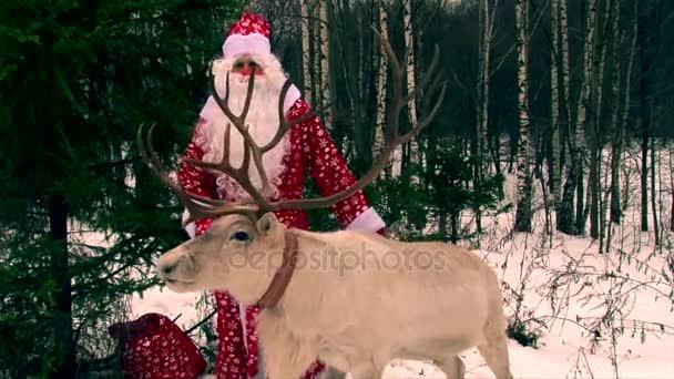 A rénszarvas és Mikulás jelmez férfi gratulálni emberek, kellemes karácsonyi ünnepeket kívánnak a gyerekek, a kamera, nap fény, a téli erdő