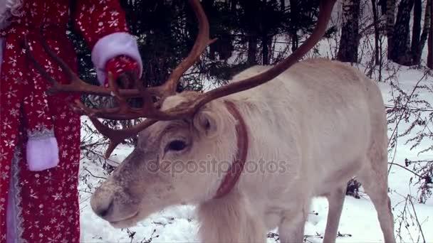 Vértes rénszarvas vezetője a nagy Agancsok, Santa Claus
