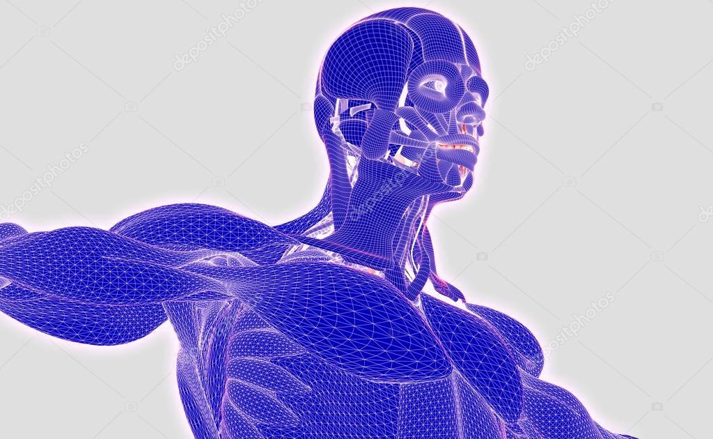 modelo de anatomía humana — Foto de stock © AnatomyInsider #128999854
