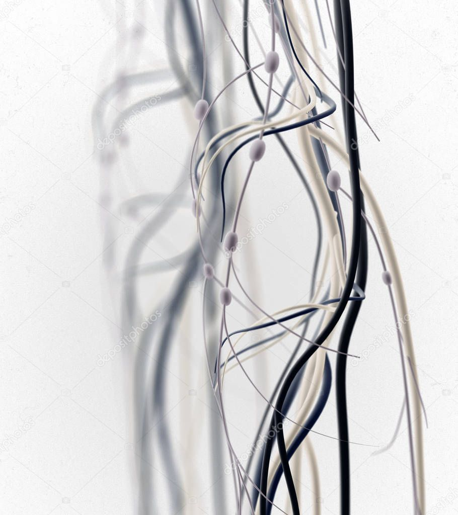 menselijke knie anatomie details — Stockfoto © AnatomyInsider #129001384