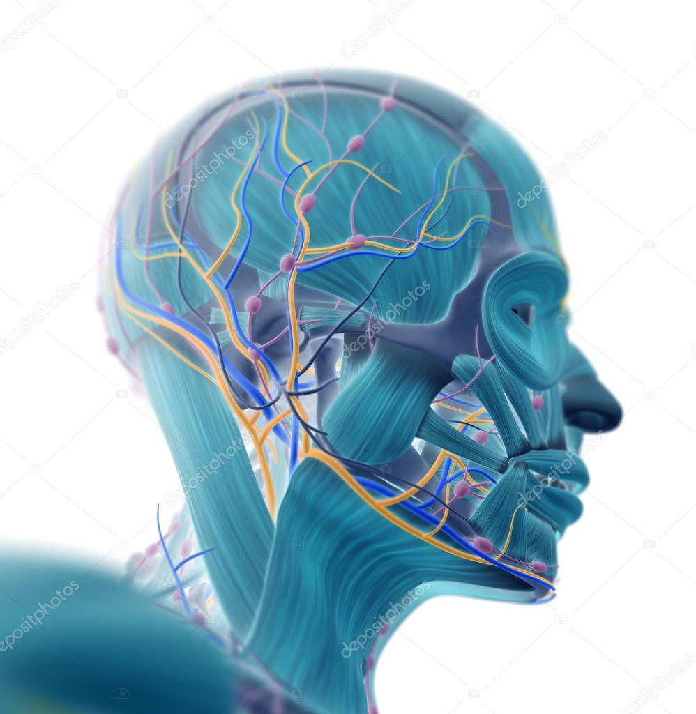 Menschliche Gehirn-Impuls-system — Stockfoto © AnatomyInsider #129006780