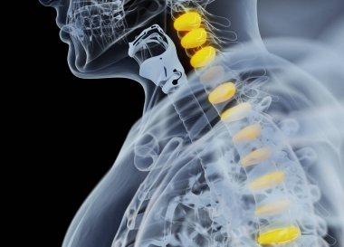 Human spine discs anatomy model