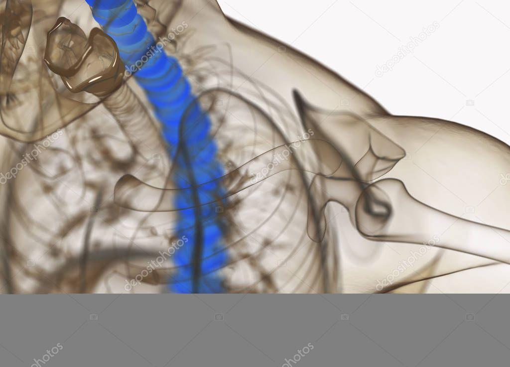 Modelo de anatomía humana columna discos — Fotos de Stock ...