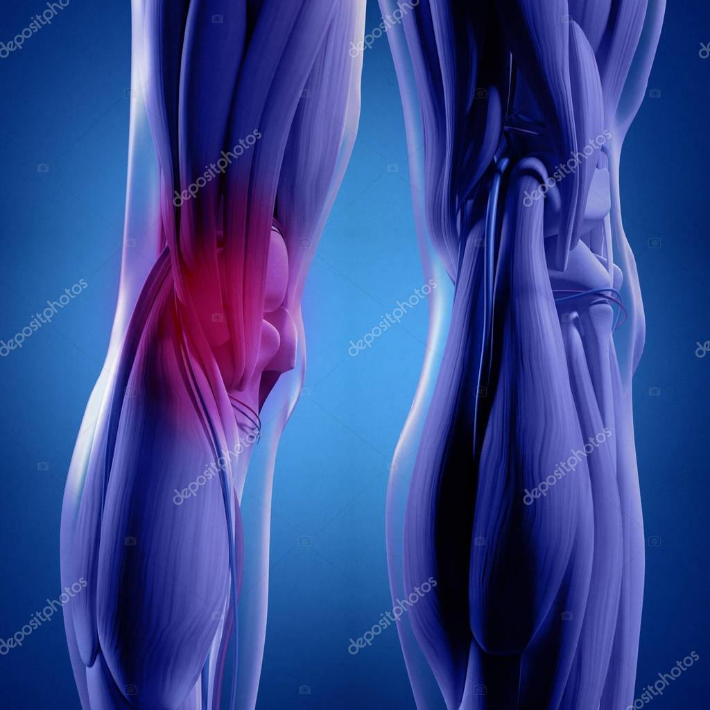 Humano la parte trasera de la anatomía de las piernas — Foto de ...