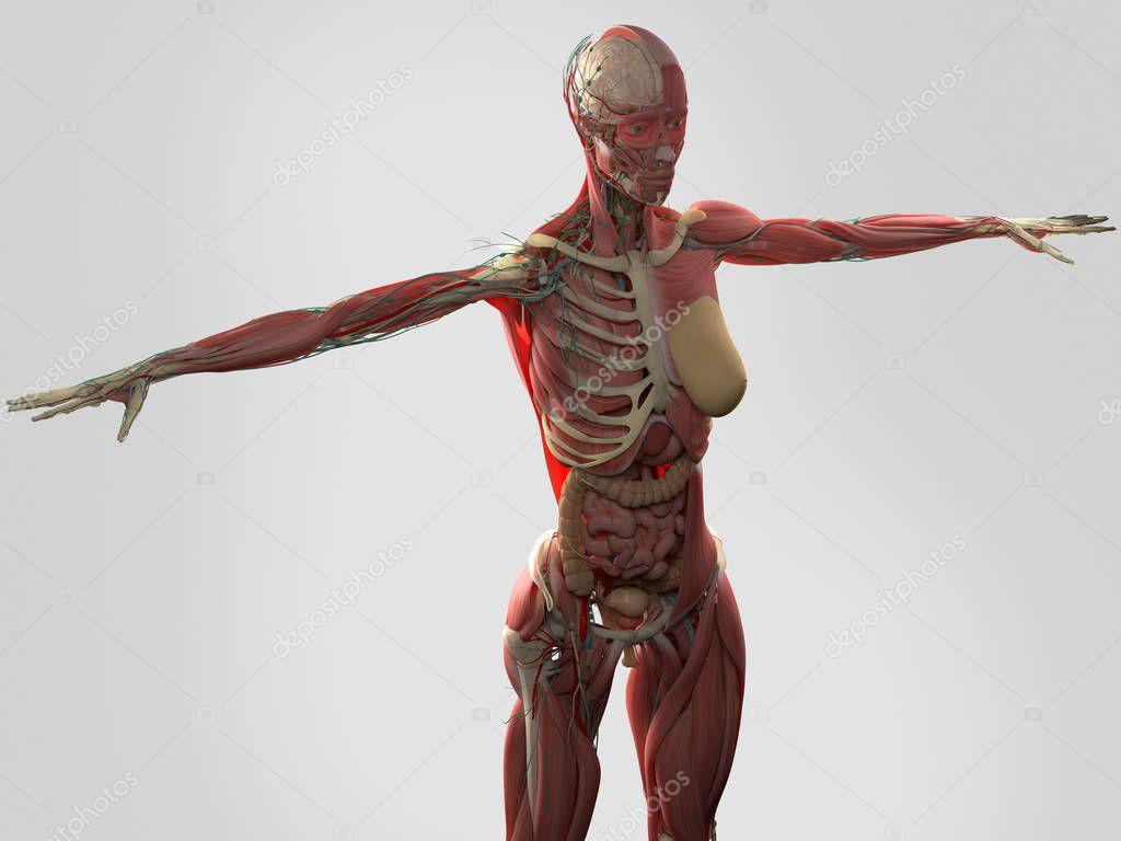 女尸体解剖 女性尸体解剖— 图库照片#