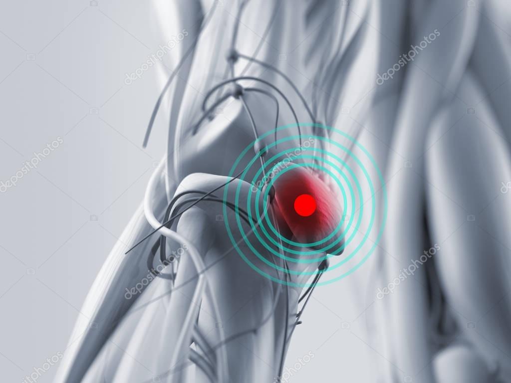Anatomy Model Of Knee Injury Stock Photo Anatomyinsider 129018606
