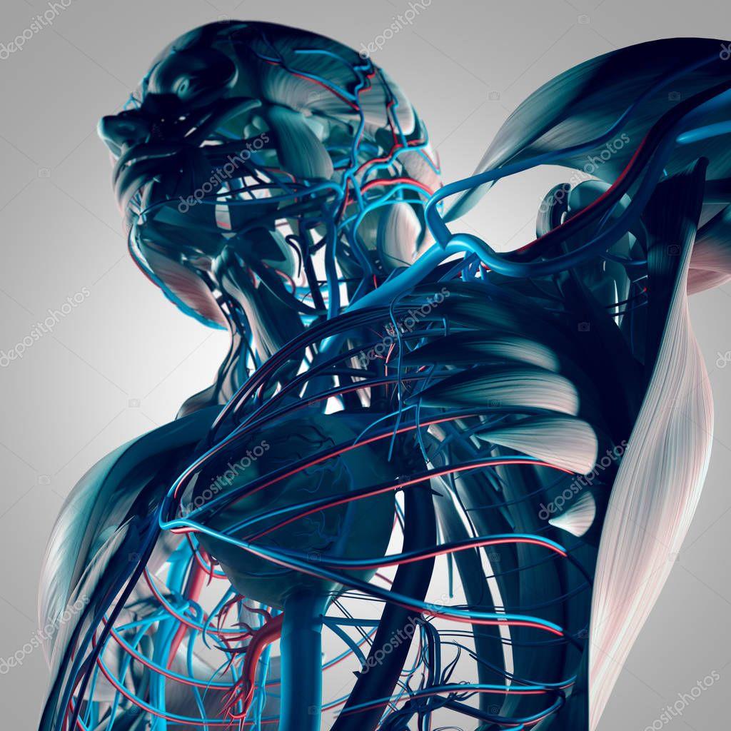 Human Torso Anatomy Stock Photo Anatomyinsider 129019550