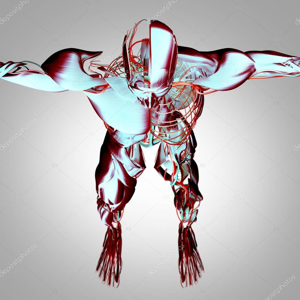 Menschliche Gehirn-Anatomie-Modell — Stockfoto © AnatomyInsider ...
