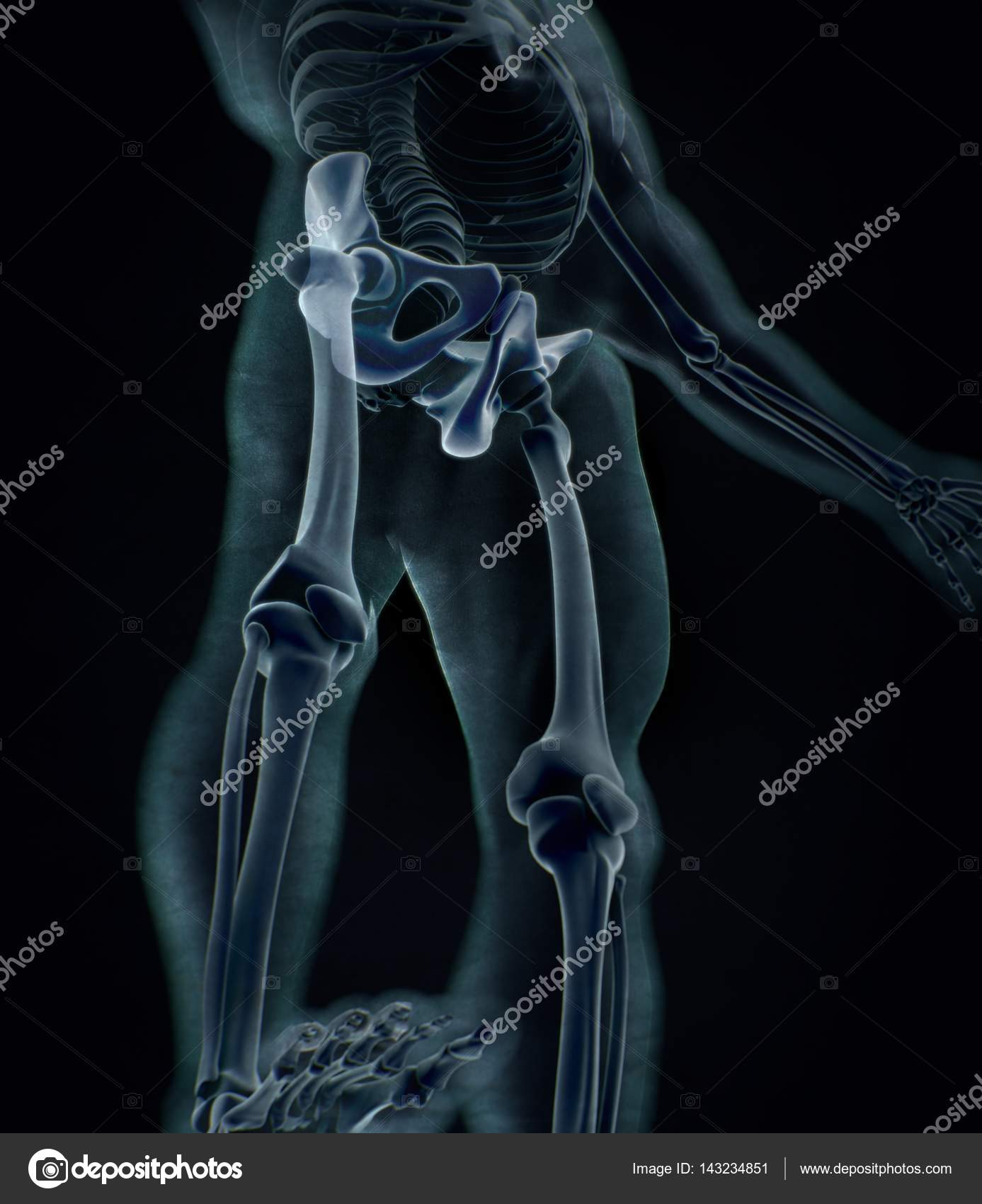 Ilium Anatomie Modell — Stockfoto © AnatomyInsider #143234851