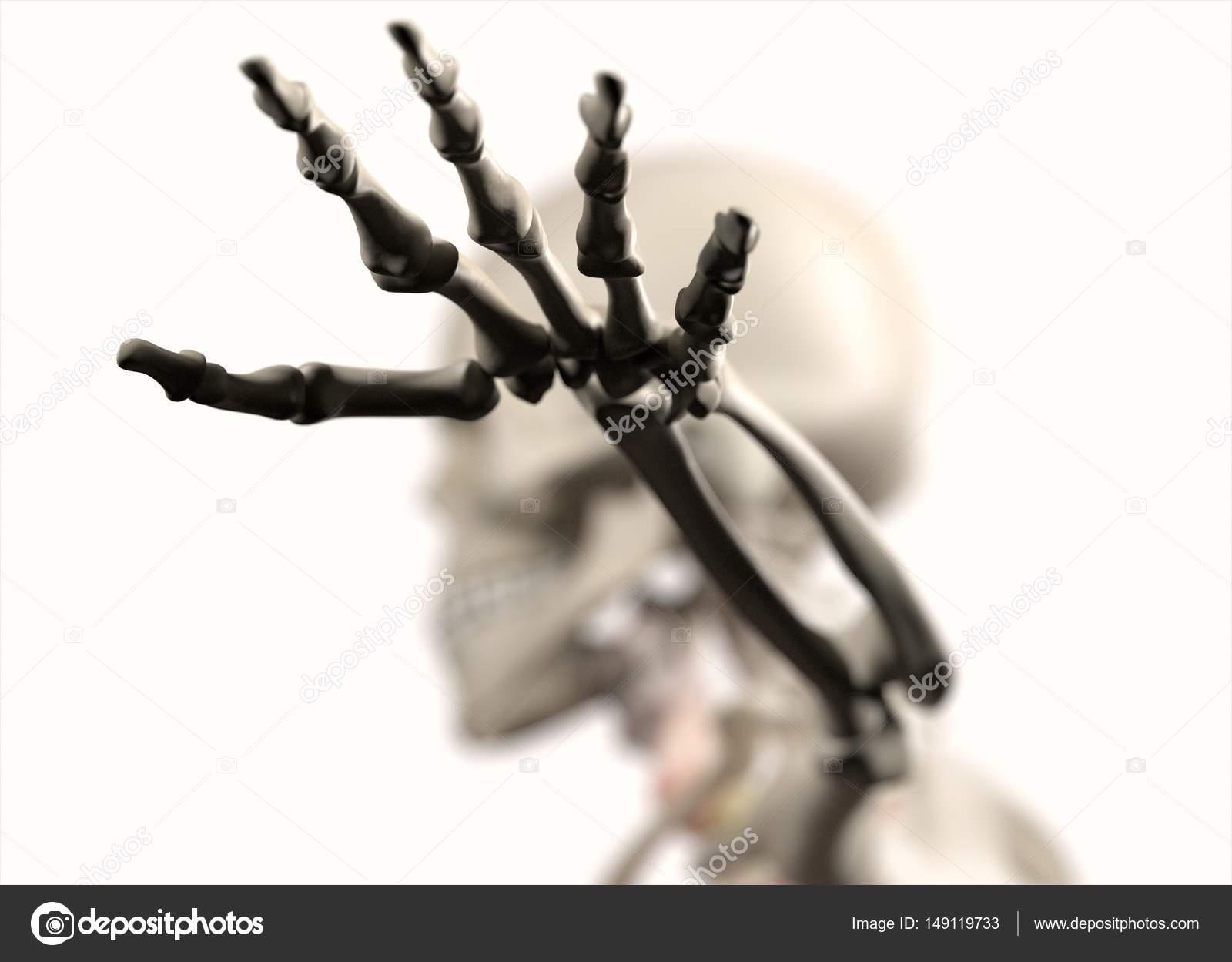 hand van de menselijke anatomie model — Stockfoto © AnatomyInsider ...