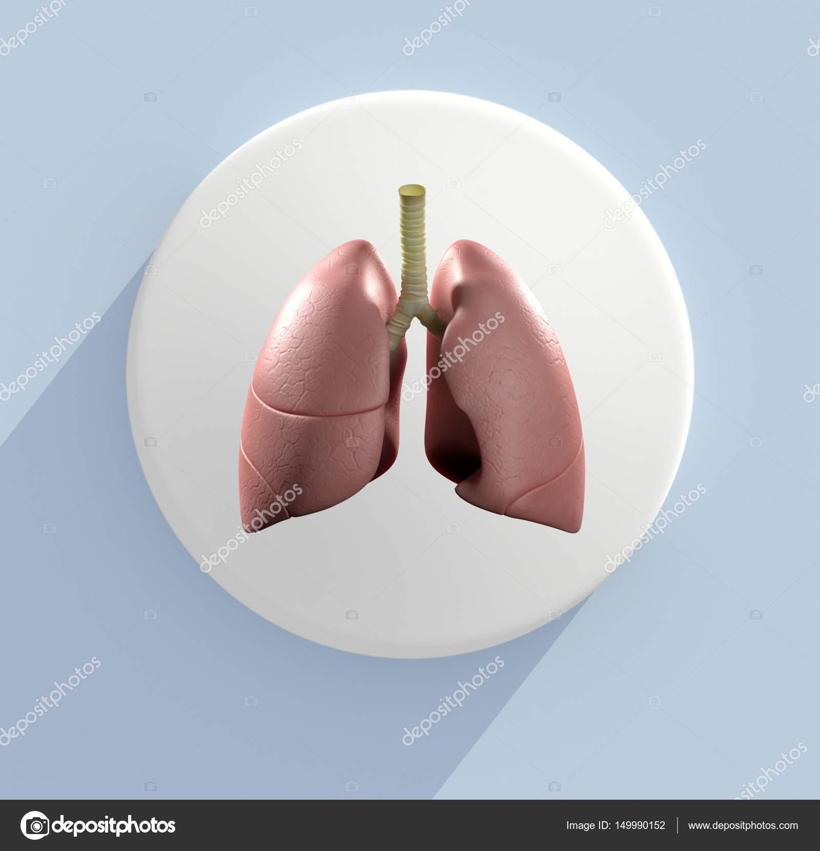 menschliche Lunge Anatomie Modell Symbol — Stockfoto ...