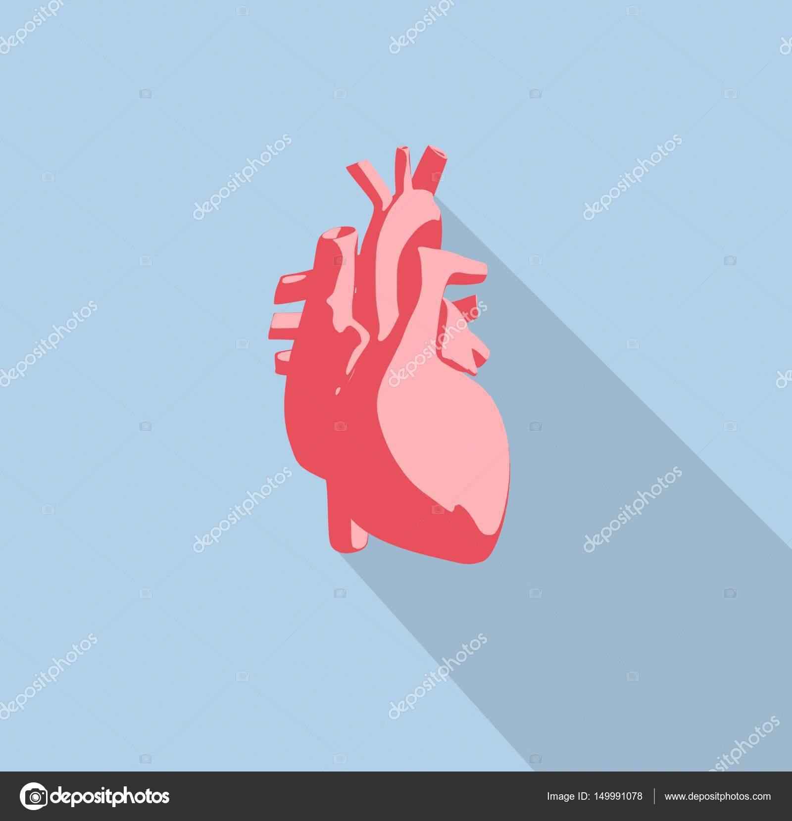 Icono de modelo de corazón humano Anatomía — Fotos de Stock ...