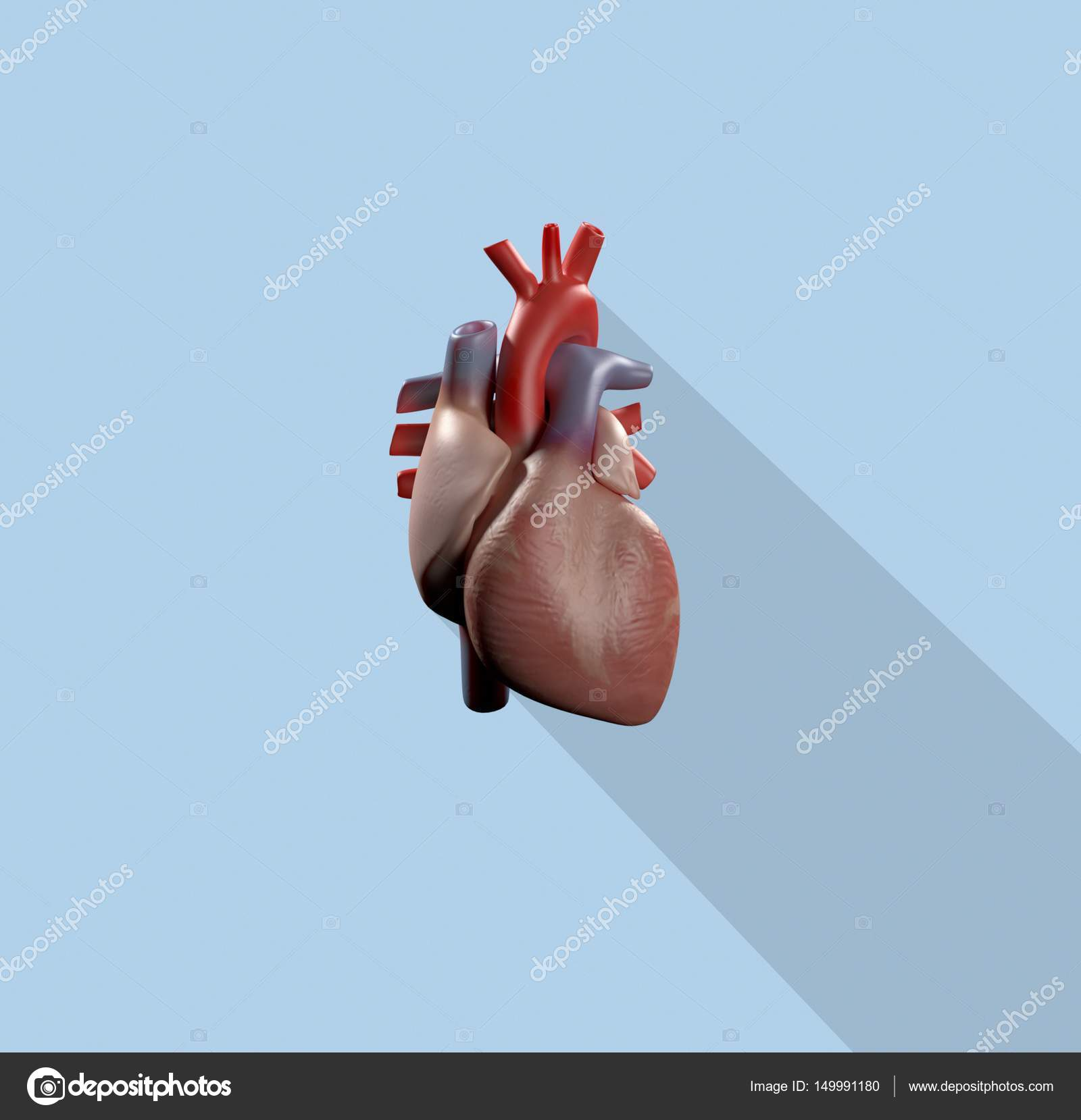 Human heart anatomy model icon — Stock Photo © AnatomyInsider #149991180