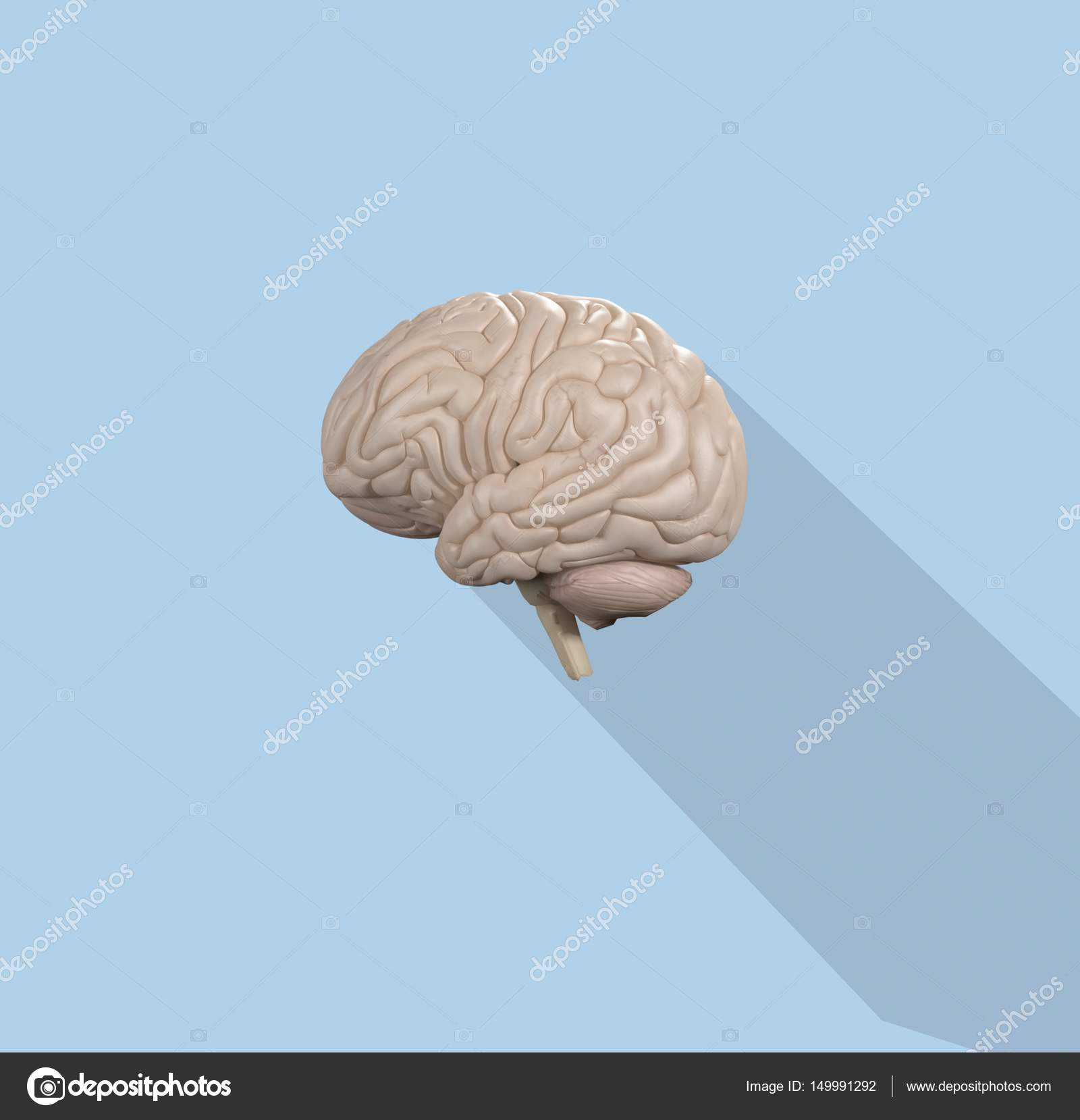 Menschliche Gehirn-Anatomie-Modell-Symbol — Stockfoto ...