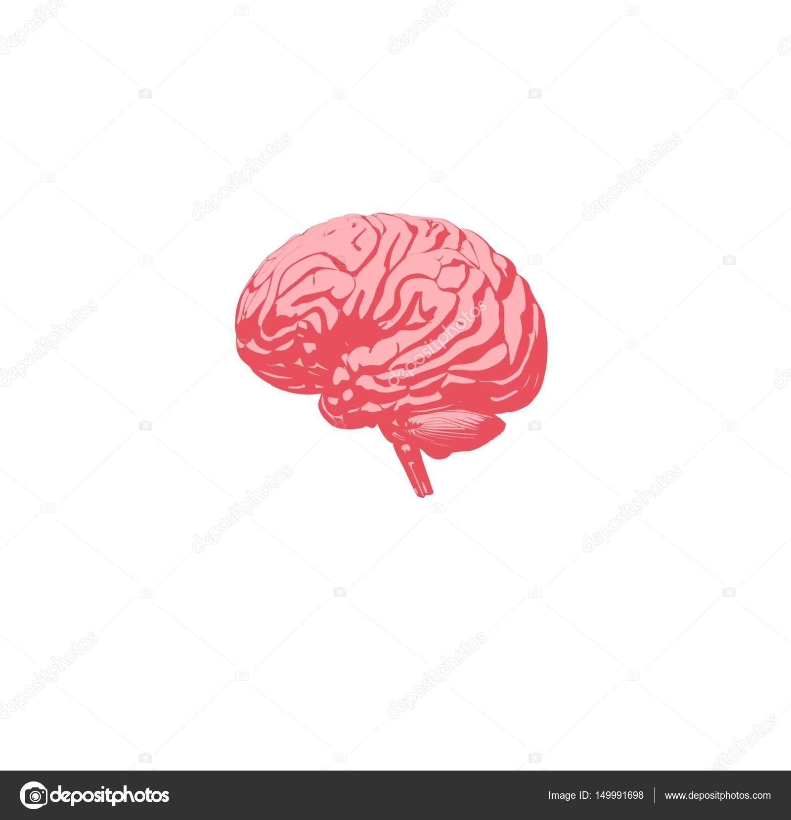 Icono de modelo de cerebro humano Anatomía — Fotos de Stock ...