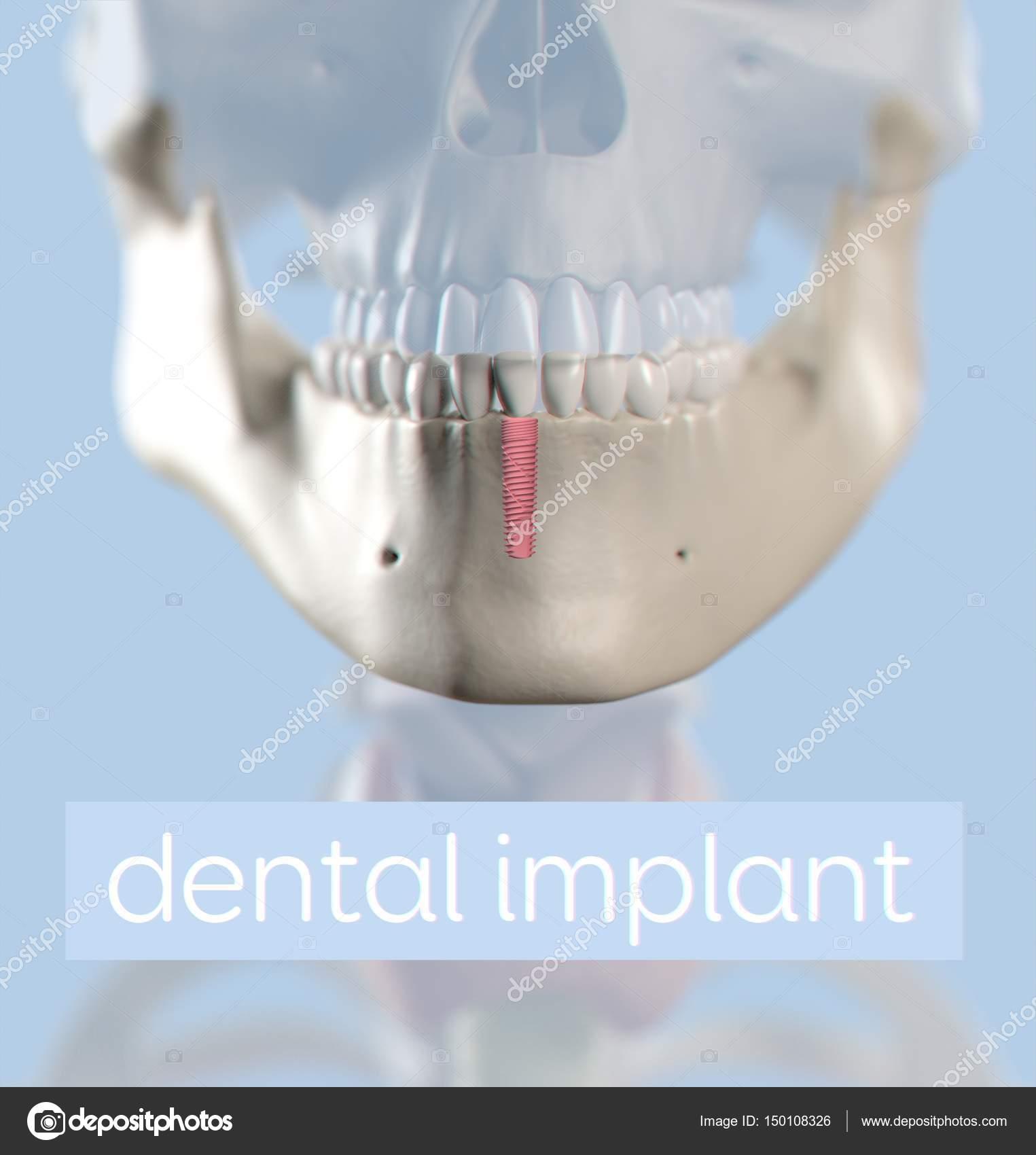 Modelo de anatomía de los dientes humanos — Fotos de Stock ...