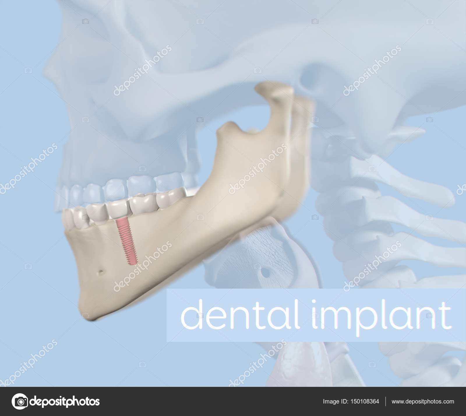 Modelo de anatomía de los dientes humanos — Foto de stock ...