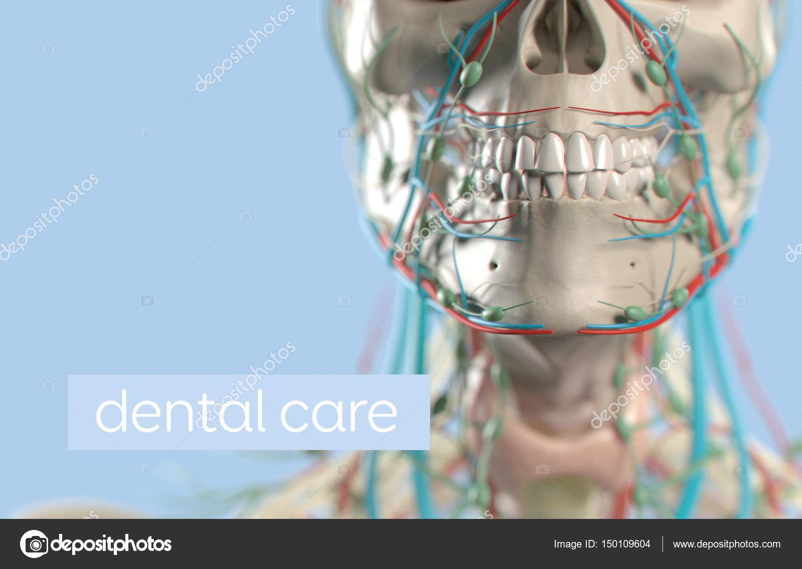 Human teeth anatomy model — Stock Photo © AnatomyInsider #150109604
