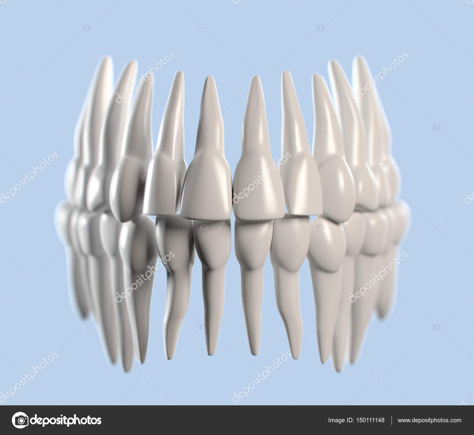 Human Teeth Anatomy Model Stock Photo Anatomyinsider 150111148