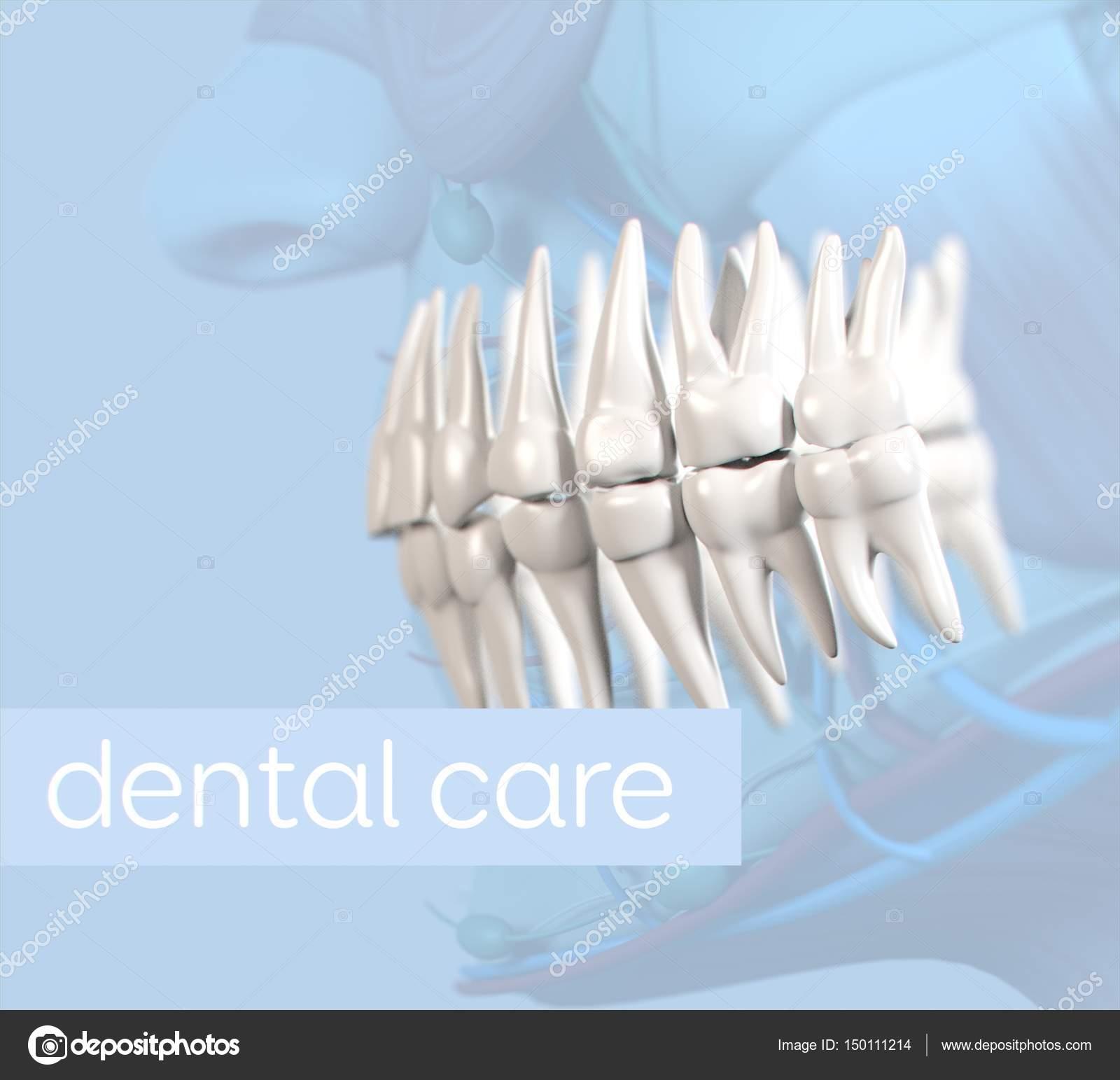 Human Teeth Anatomy Model Stock Photo Anatomyinsider 150111214
