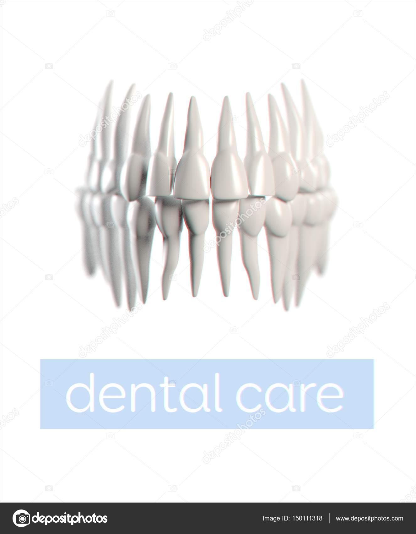Human Teeth Anatomy Model Stock Photo Anatomyinsider 150111318