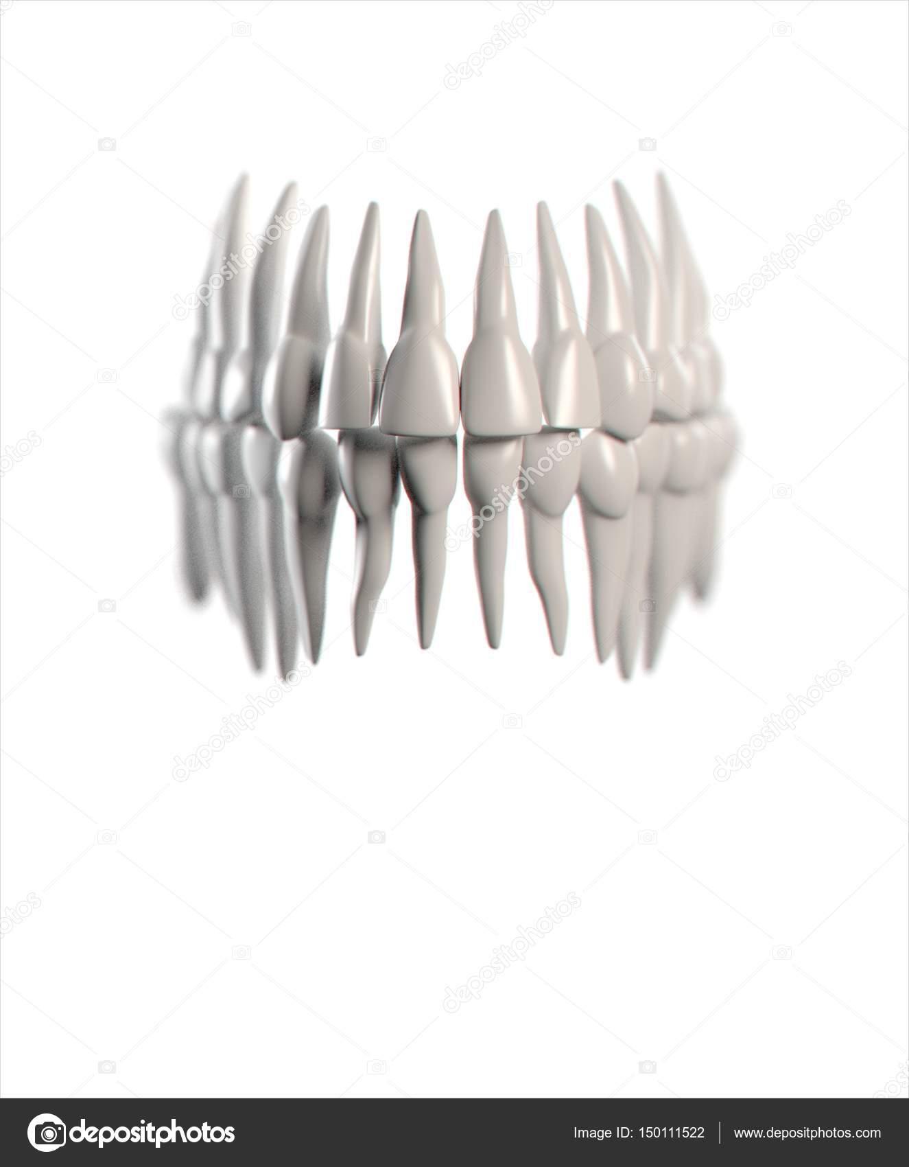 Human Teeth Anatomy Model Stock Photo Anatomyinsider 150111522