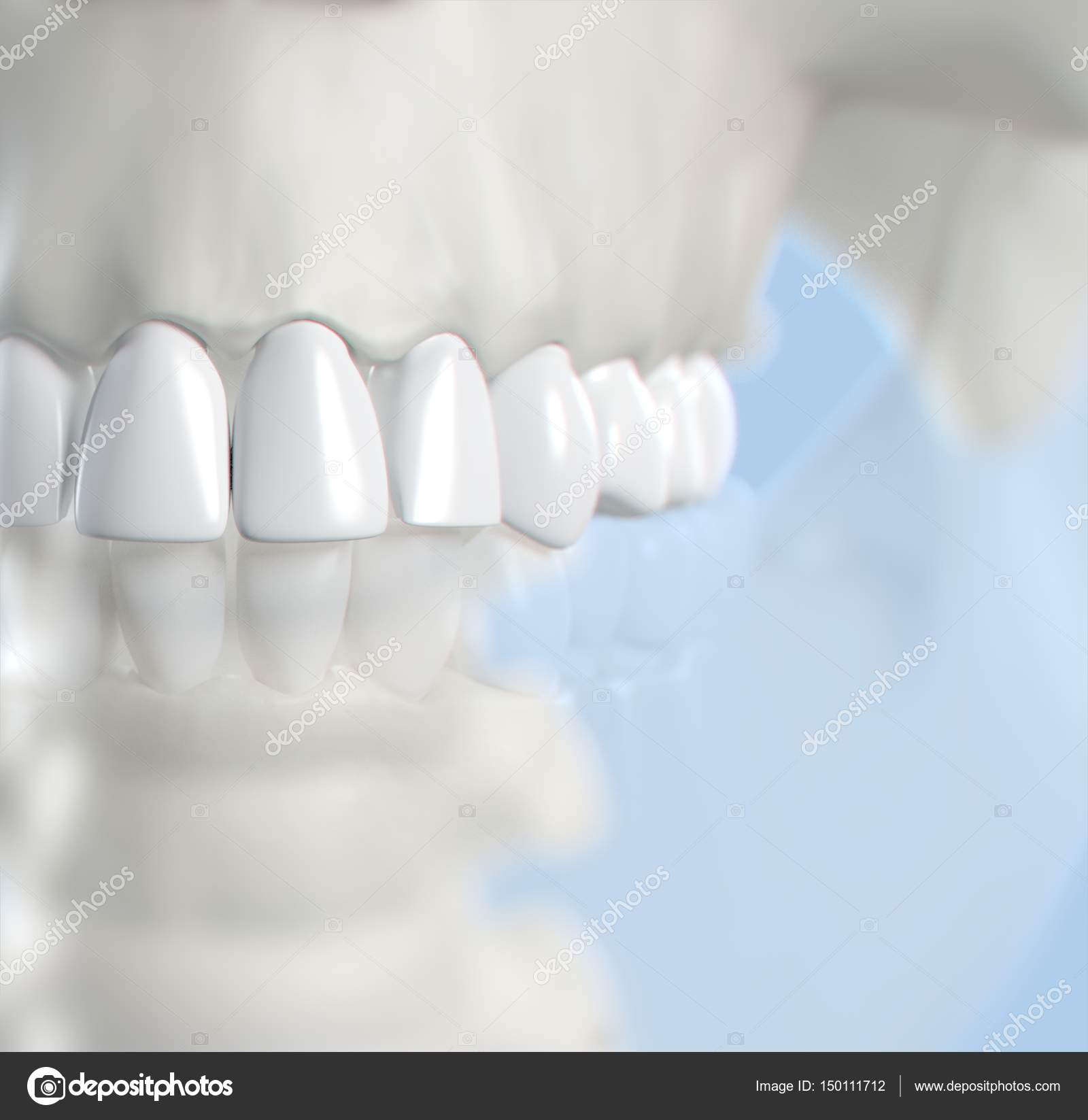 Human teeth anatomy model — Stock Photo © AnatomyInsider #150111712