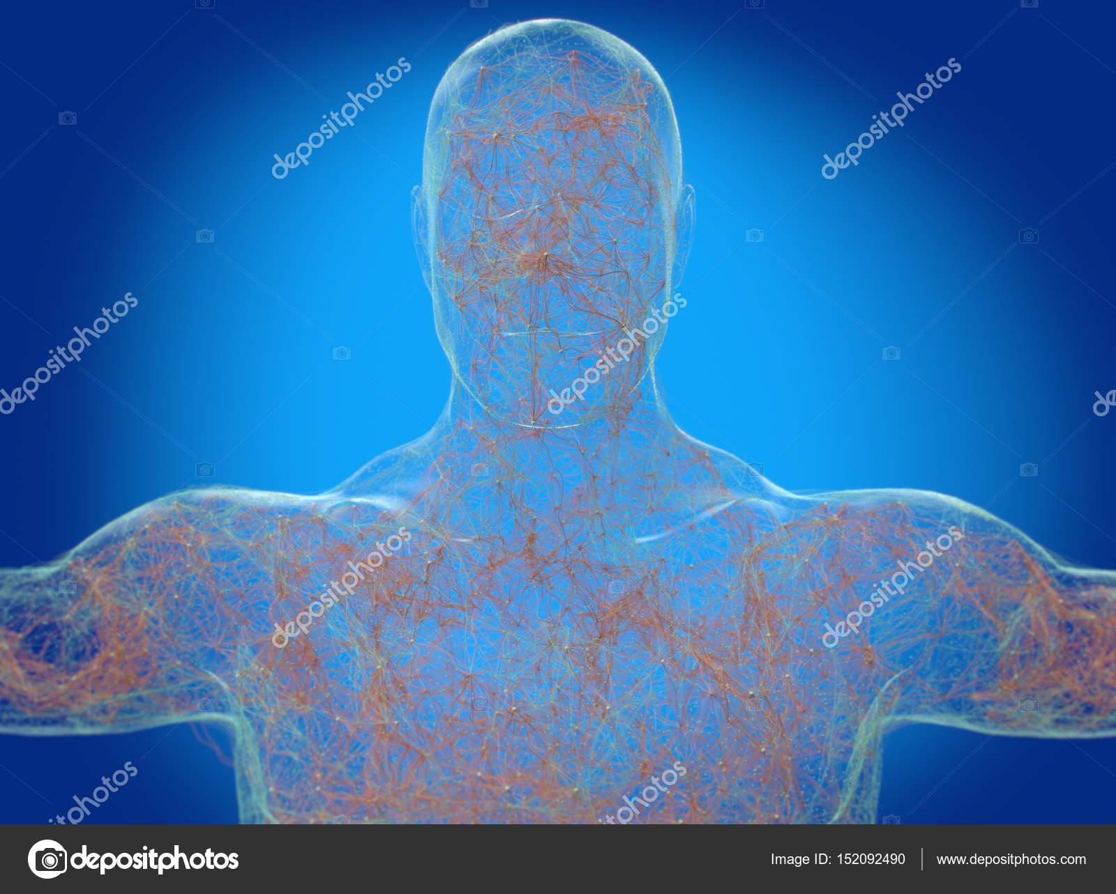 Menschlichen Körpers Neurologie, Nervensystem — Stockfoto ...