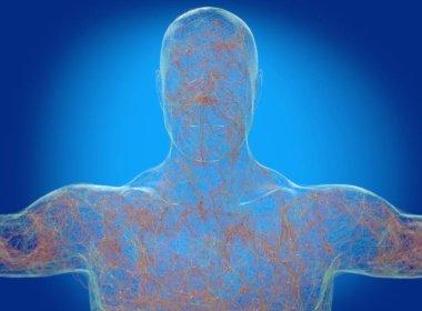 Human body neurology, nervous system