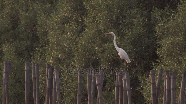 Klidný pták je posazená na bambusové pařez