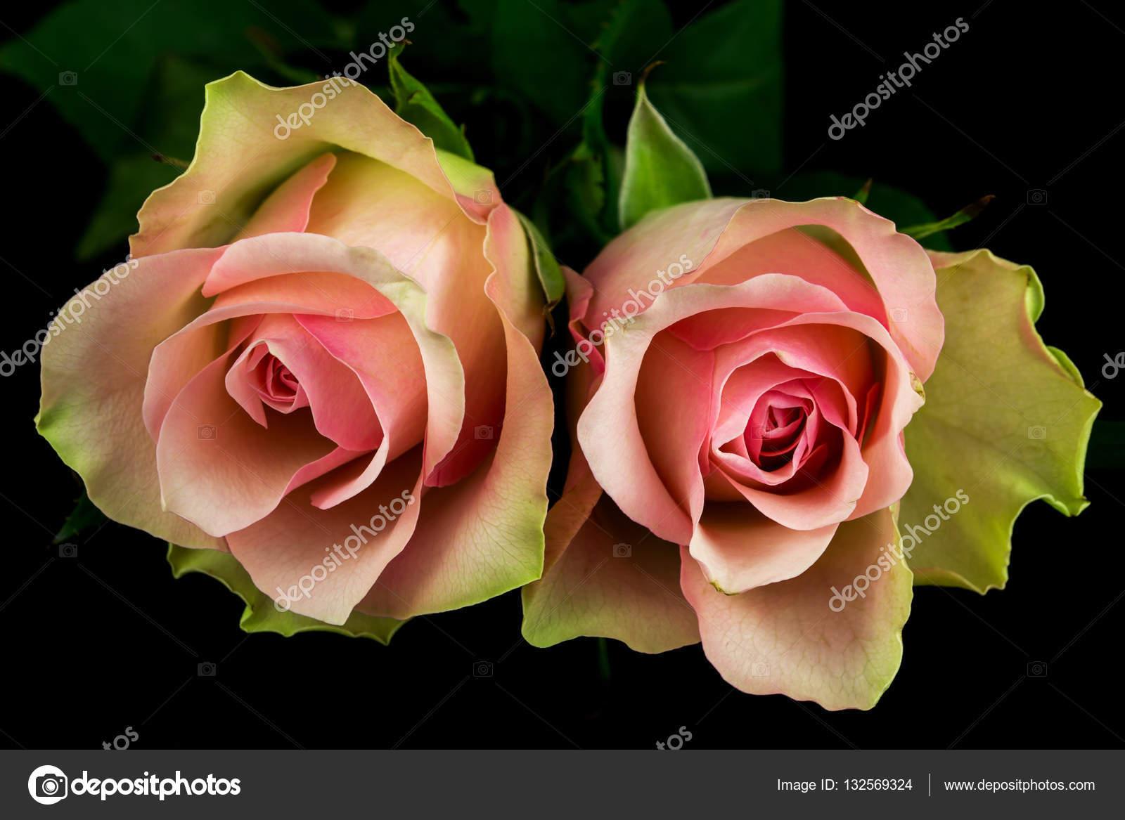 poem of roses stock photo veroja 132569324