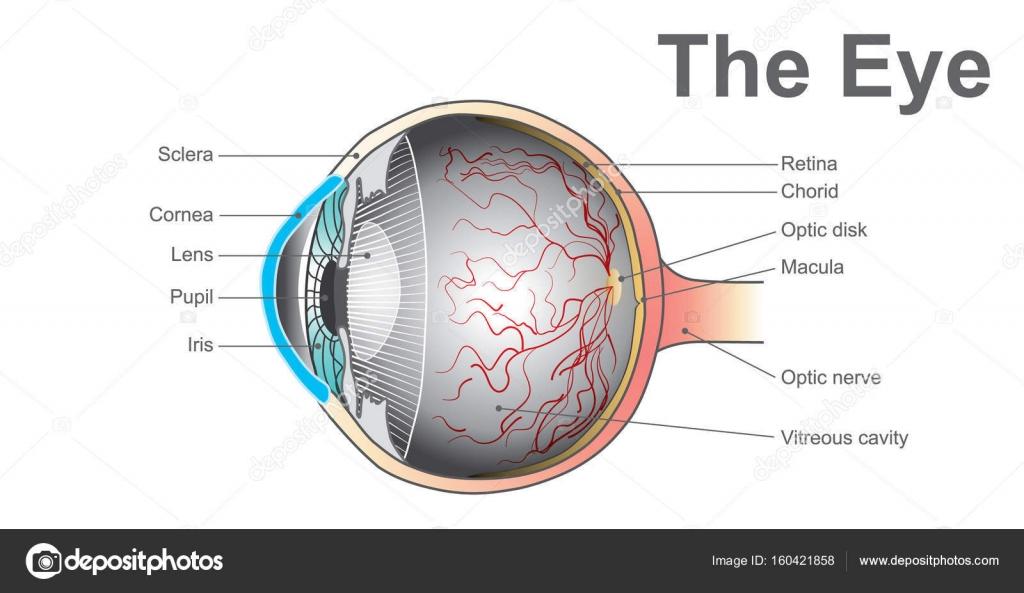 Eye system. Vector design. — Stock Vector © pattarawit #160421858