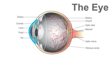 Eye system. Vector design.