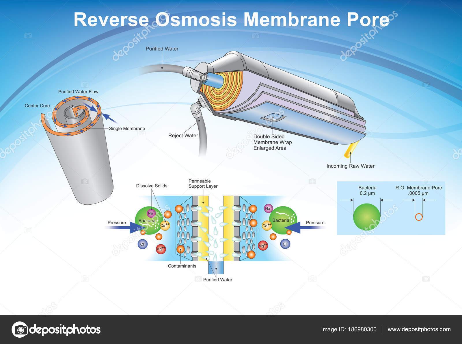 Reverse-Osmose-Membran-Pore-System. Abbildung — Stockvektor ...