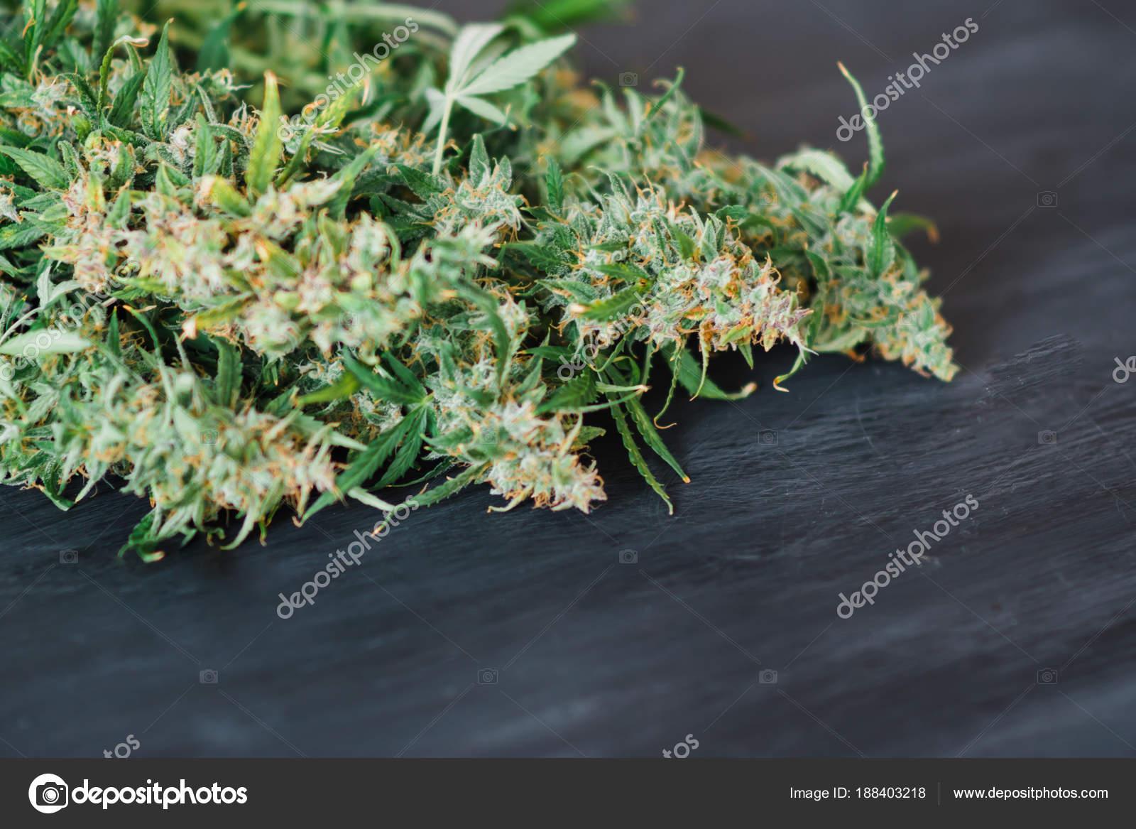 Fond d\'une récolte fraîche de bourgeons de cannabis sur un tableau ...