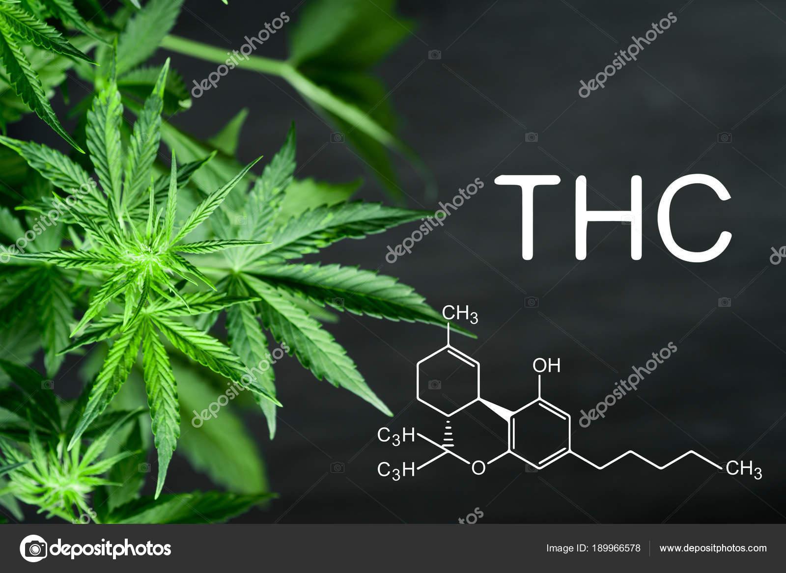 Thc Chemische Formel Schöne Hintergrund Von Grünen Cannabis