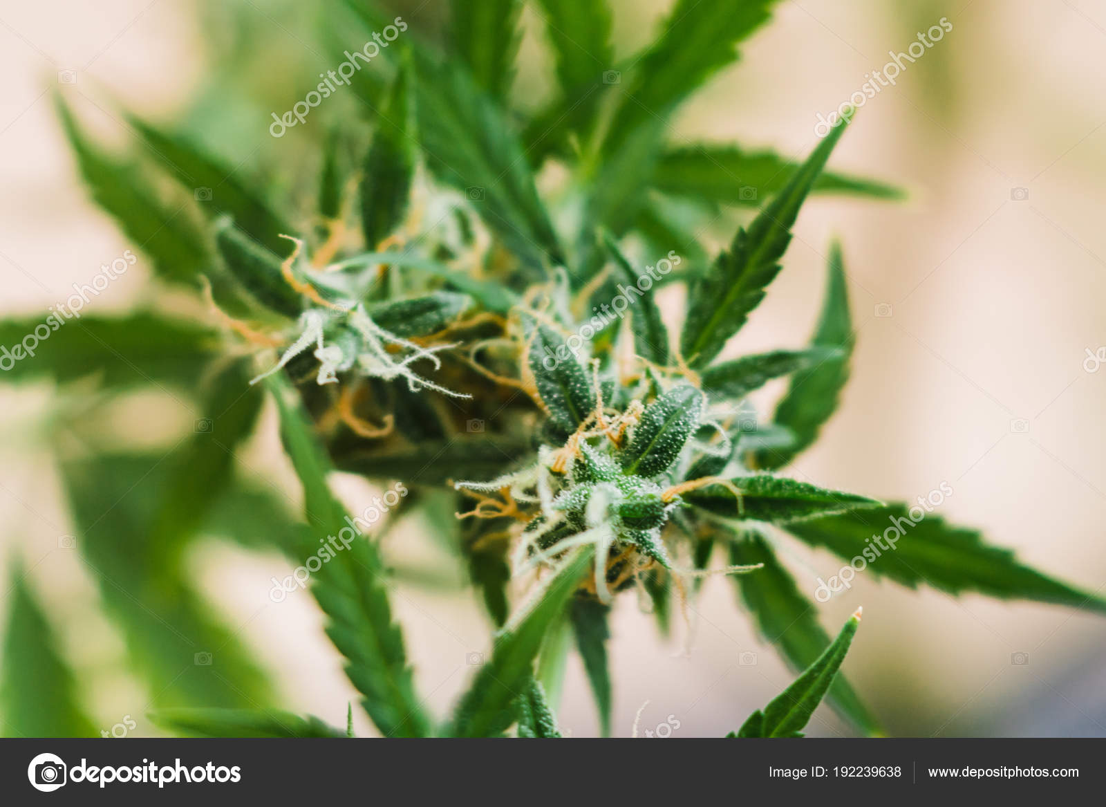 Где в конопле больше тгк бабушки пробуют марихуану