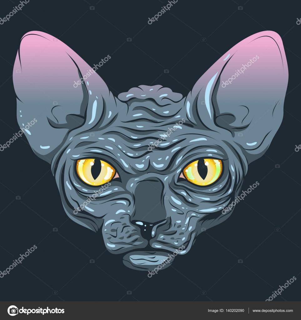 Kot Bez Sierści Sfinks Z Oczy Ciemny Kolor Szary żółty Grafika