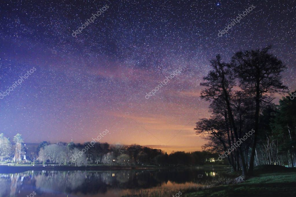 Night landscape of the park with a tree and a lake in the background of the starry sky.