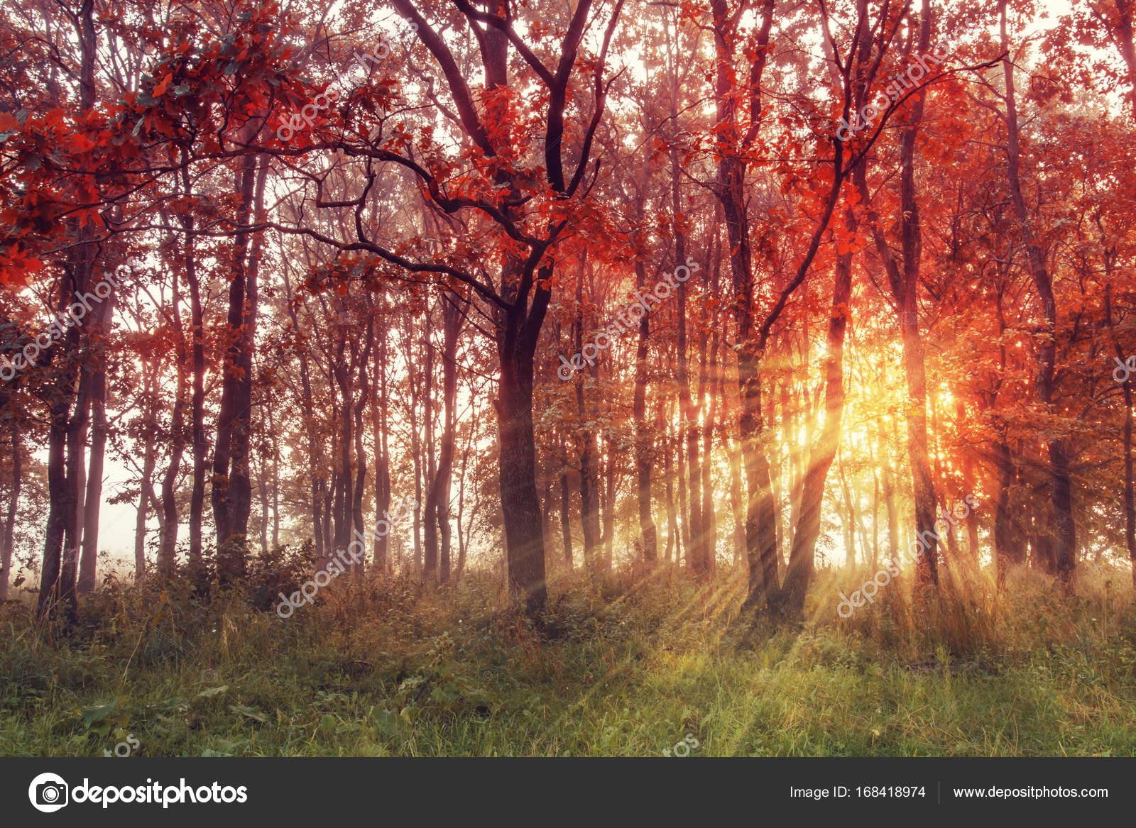 Herbst Hintergrund Herbst Szene Landschaft Mit Bunten Wald Im