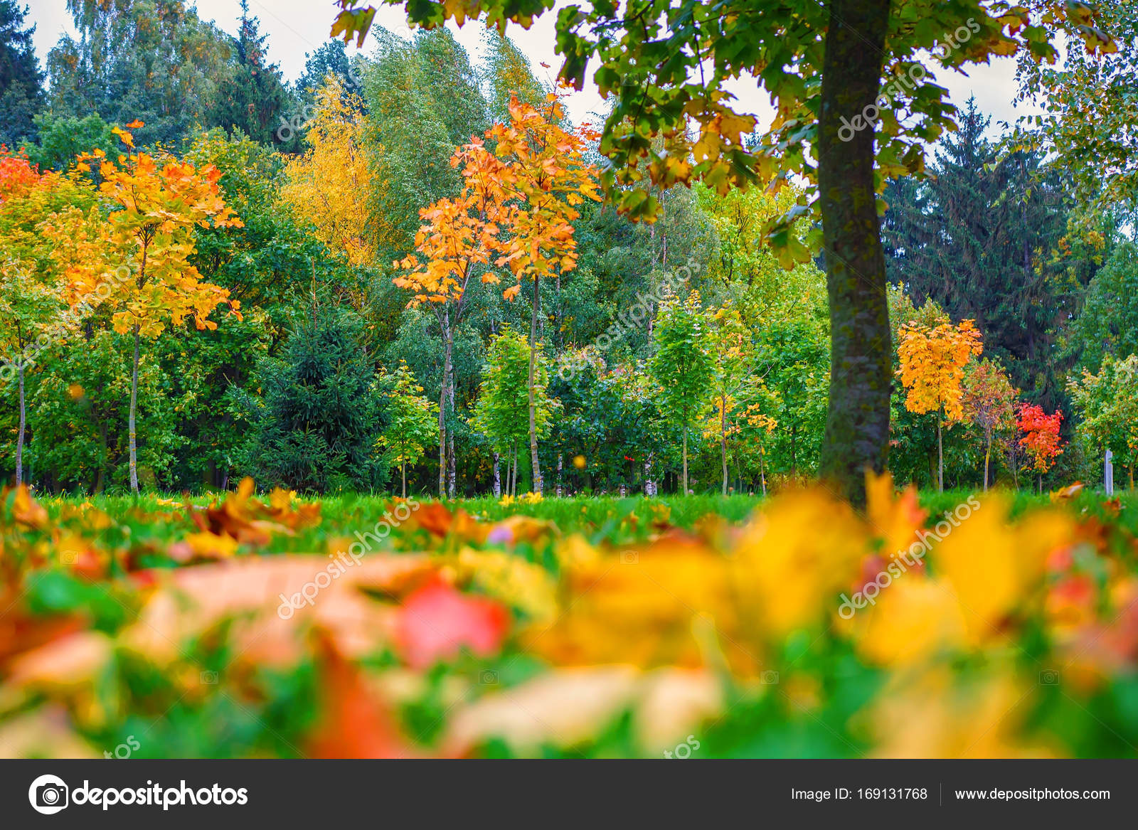 Autumn nature. Colorful trees in park. Autumn background. Fall scene ...
