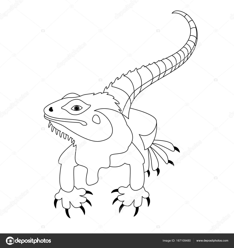 lizard vector illustration line drawing front stock vector 167109480