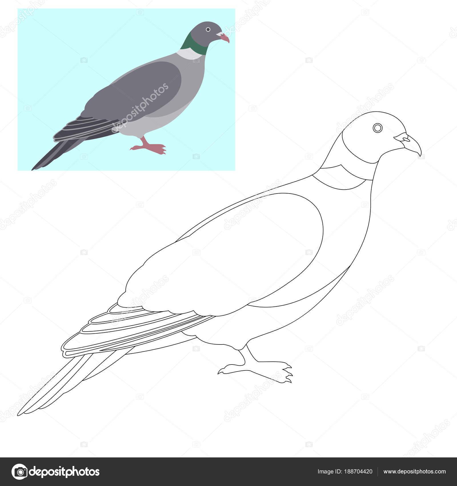 Paloma Paloma vector ilustración página para colorear — Vector de ...